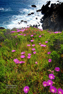 Flowers on the Cliffs