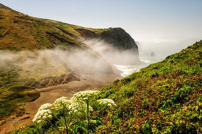 Foggy Tennessee Cove Beach