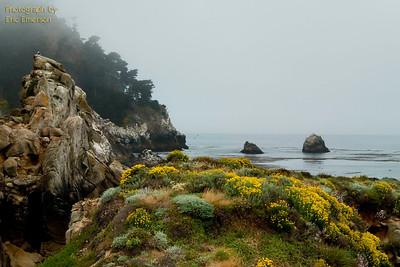 Foggy Point Lobos