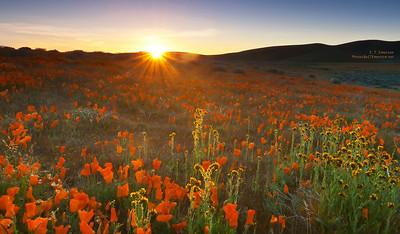 Sunrise - Antelope Poppy Preserve