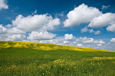 Mustard and Clouds
