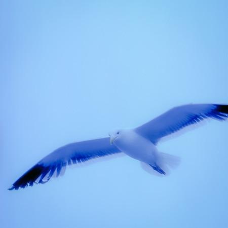 Seagull, California