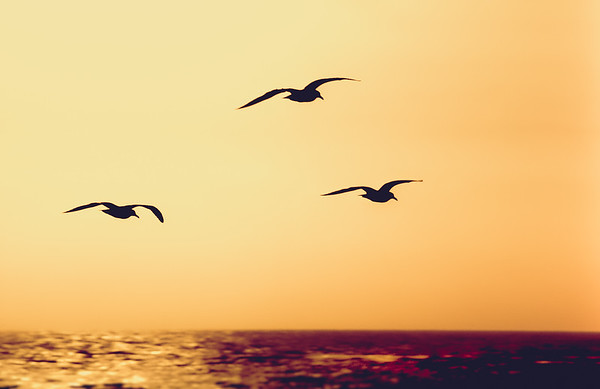 Seagulls, California