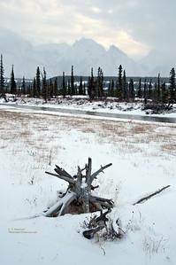 Kootenay Plains, Bighorn Wildlands