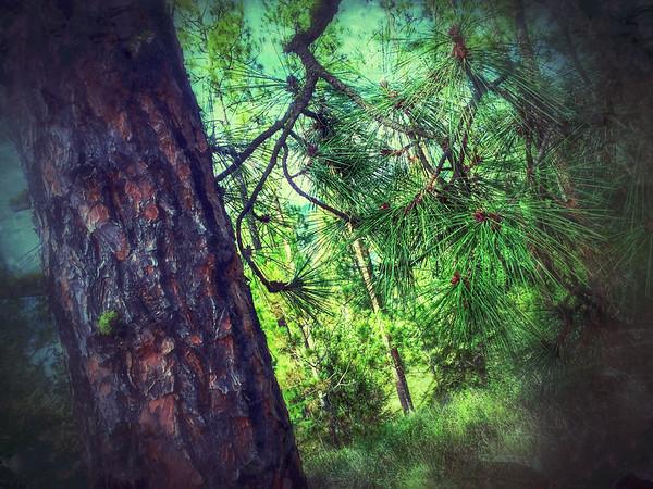 Dreamwood Bay Forest, Liberty Lake, Washington