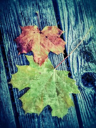 fall-leaves-6126