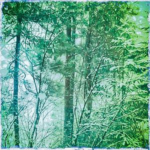 dreamwood-bay-4847