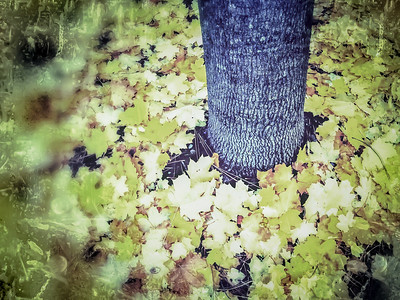 fall-leaves-6120