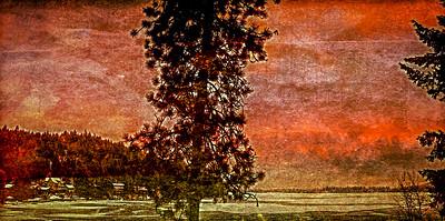 Trees- Liberty Lake, Washington