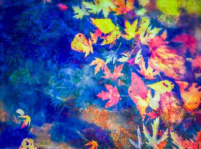 fall-leaves-6182