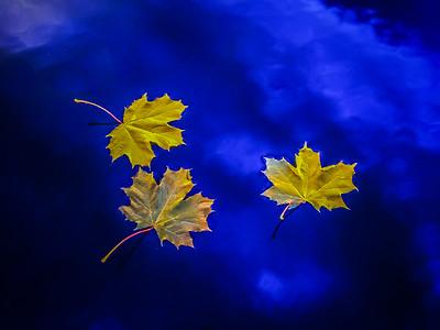 fall-leaves-6127