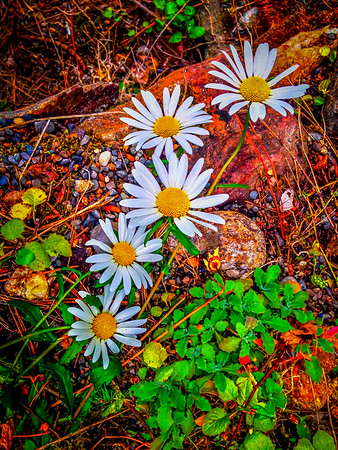 Flowers, Dreamwood Bay, Liberty Lake, Washington