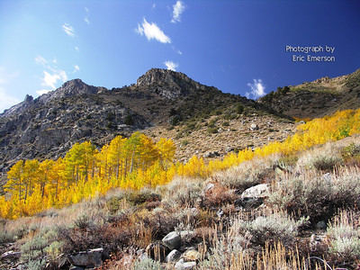 June Lake Band of Color