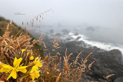 Foggy Crescent City Beach