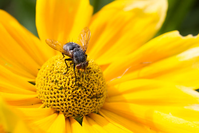 New Hampshire-Flowers-Insect