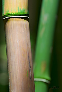 In Haleakala's Bamboo Forest