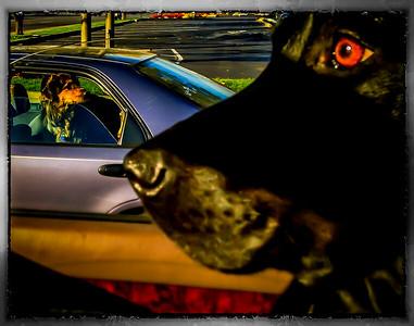 Doggies make friends in traffic!