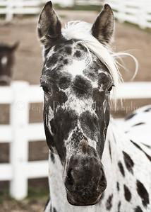 Horse_082