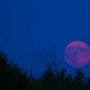 Super Duper Moon