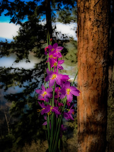 Another Flower and Pines Dream