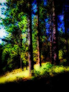Glow in the Pines- Liberty Lake, Washington