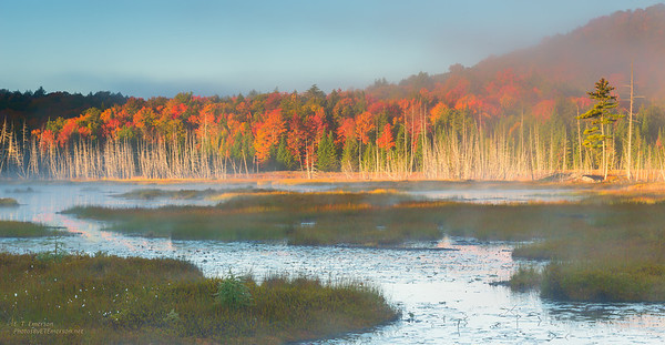 Misty Pond at Sunrise in the Adirondack Mountains,