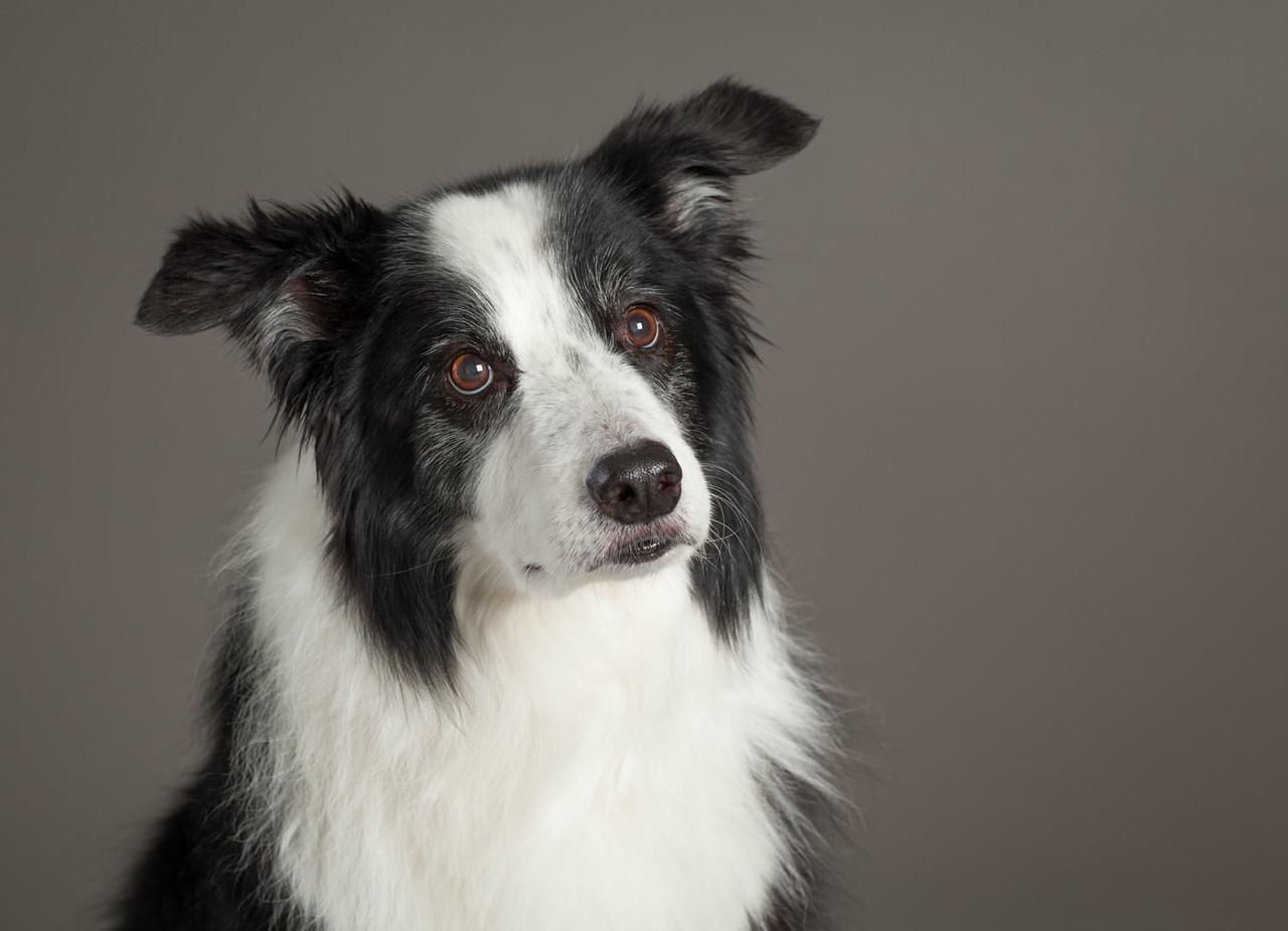 Senior Pup
