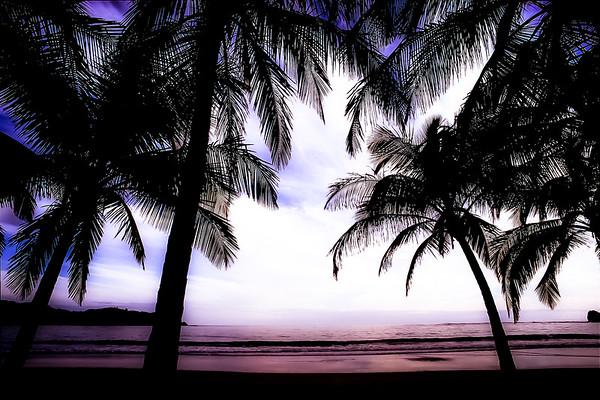 Carrillo Beach Palms at Sunset, Costa Rica