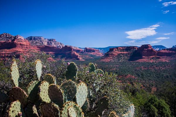 Cactus on Sedona Plains