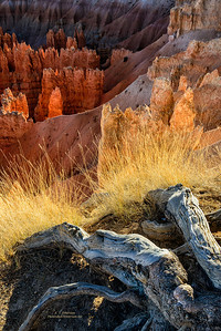 Glowing Hoodoos and Grass Accent Tree Roots