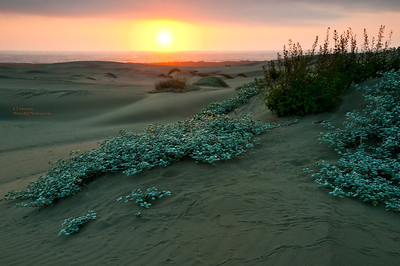 MacKerricher Dunes Sunset