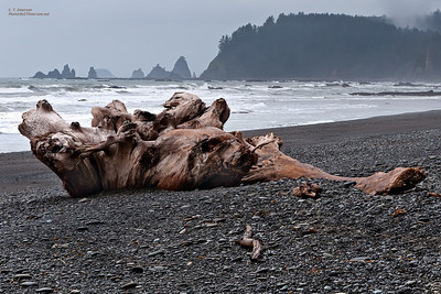 Cloudy Olympic Coast Beach