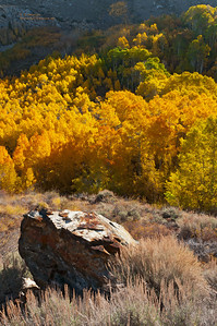 South Bishop Creek Aspen