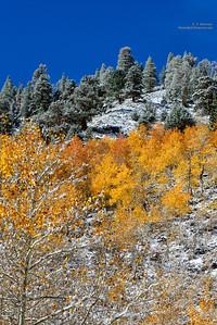 Rock Creek Snowy Aspen