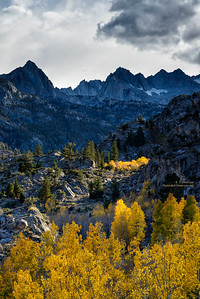 Bishop Creek Aspen