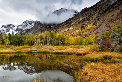 Lundy Canyon Reflections