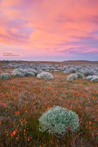 Sunset at Antelope Poppy Preserve