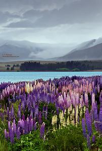 Lake Tekapo (NZ) Lupine and Showers
