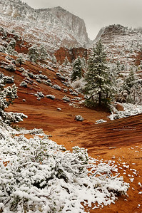 Fresh Snow in Zion's East Side