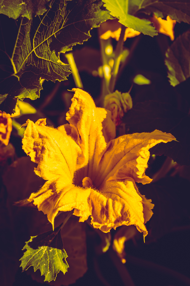 Can't wait to make some squash flower quesadillas