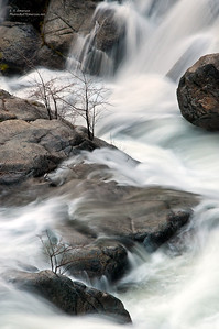 Tamarack Creek