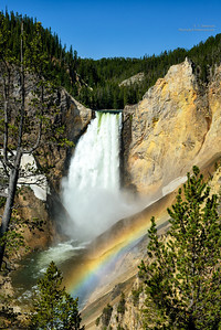 Lower Falls in Yellowstone
