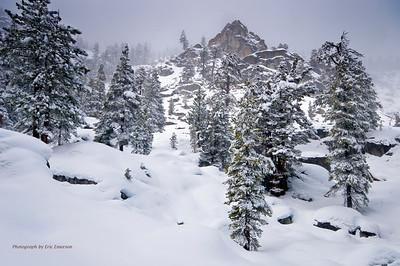 Snowy Trees near Echo Summit