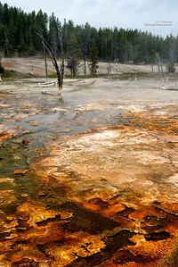 Thermal area along Firehole Lake Drive