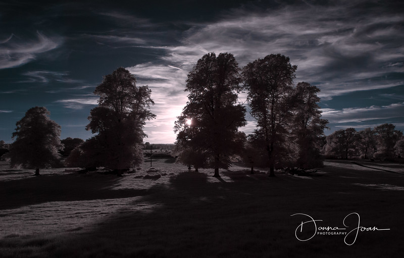Infrared At Sunset