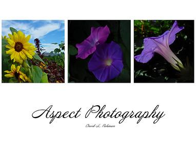 Aspect Photography Portfolio