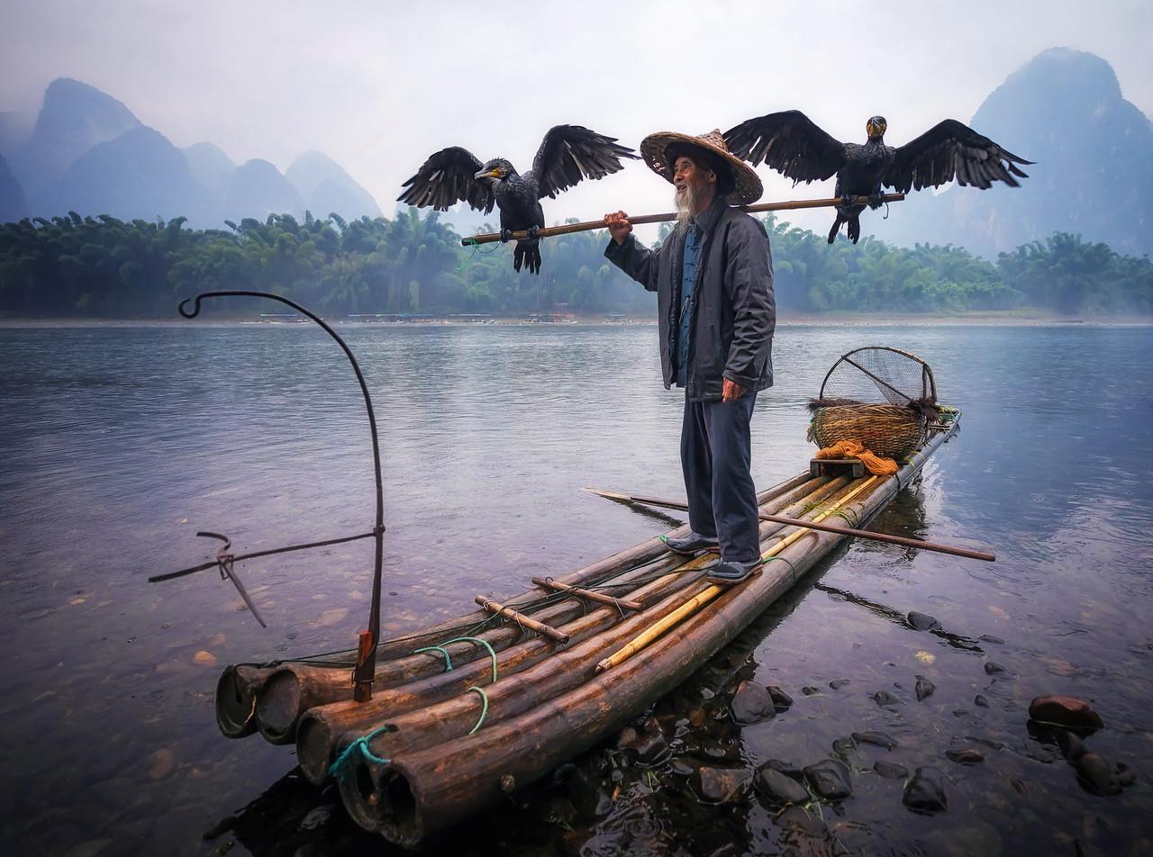 Cormorant Master