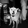 Dogs in an Irish Pub