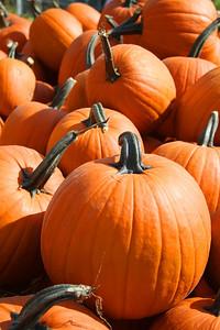 SC 47 Pumpkin Pile