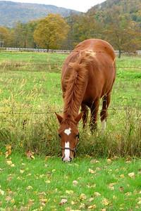 SC 23 Horse Grazing